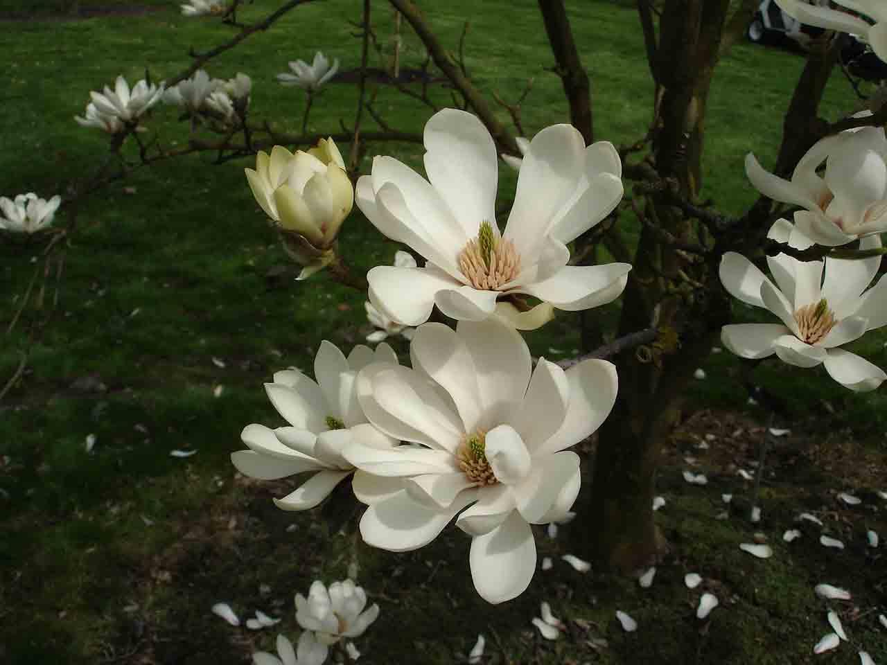 木蘭の画像 p1_14